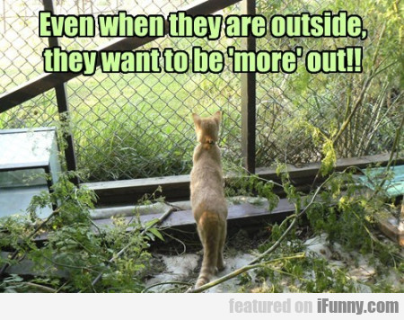 Even When They Are Outside They Want To Be...