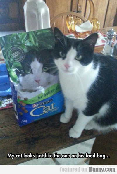 My Cat Looks Just Like The One On His Food Bag