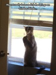 My Cat Really Loves To Lick The Strings On Window