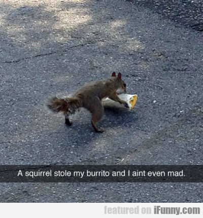 A Squirrel Stole My Burrito And I Ain't Even Mad..