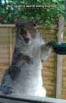 Mum Caught A Squirrel...