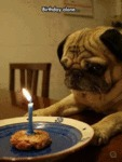 Birthday Alone...