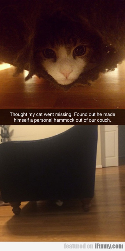 Thought My Cat Went Missing. Found Out He...