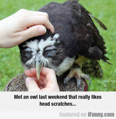Met An Owl Last Weekend That Really Likes Head...