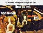 An Accurate Description Of Dogs And Cats..