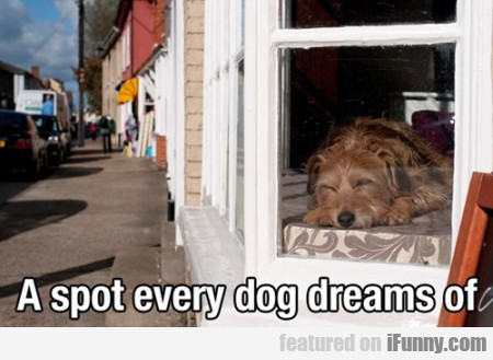 A Spot Every Dog Dreams Of
