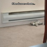 Kitten Discovers A Heater...