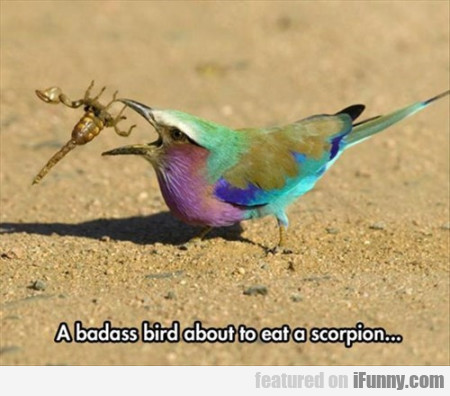 A Badass Bird About To Eat A Scorpion