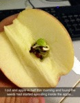 I Cut An Apple In Half...