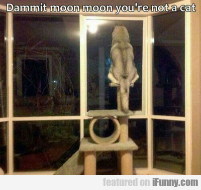 Dammit moon moon you're not a cat