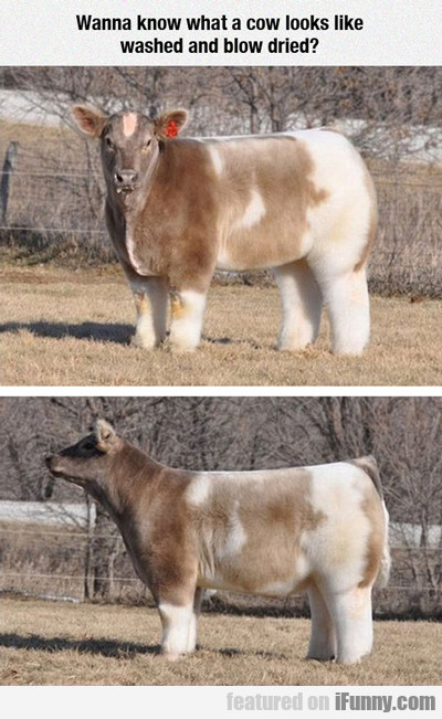 Wanna Know What A Cow Looks Like...