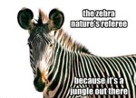 The Zebra Nature's Referee