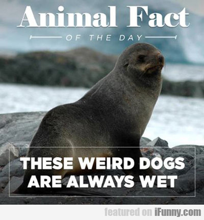 Animal Fact Of The Day...
