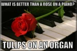 What Is Better Than A Rose On A Piano...