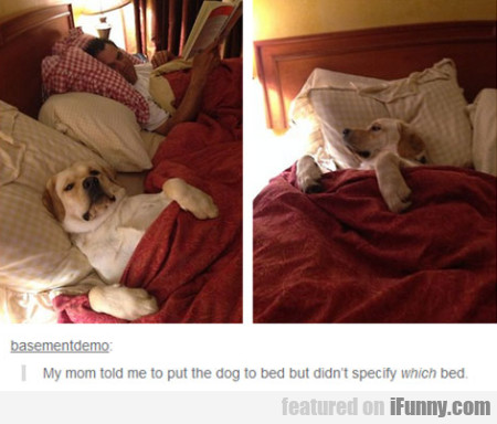 My Mom Told Me To Put The Dog To Bed But Didn't...