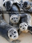 But First, Let Me Take A Sealfie...