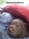 Piggy Has A Heart On His Nose...