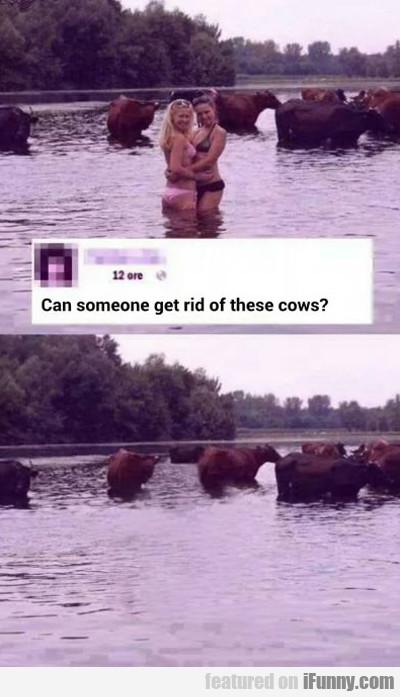 Can Someone Get Rid Of These Cows?