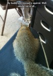 My Buddy Just Rescued A Squirrel. Well, Maybe...