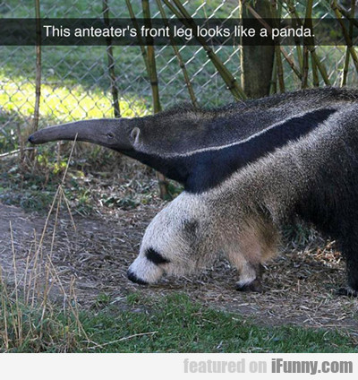 The Anteater's Front Leg...