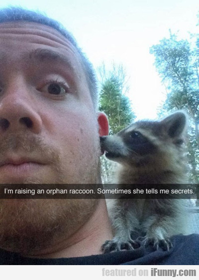 I'm Rising An Orphan Raccoon