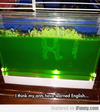 I Think My Ants Have Learned English...