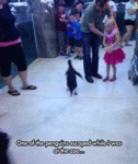 One Of The Penguins Escaped...