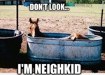 Don't Look I'm Neighkid