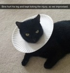 Binx Hurt His Leg And Kept Licking