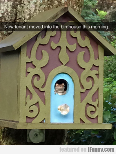 New Tenant Moved Into The Birdhouse This Morning..