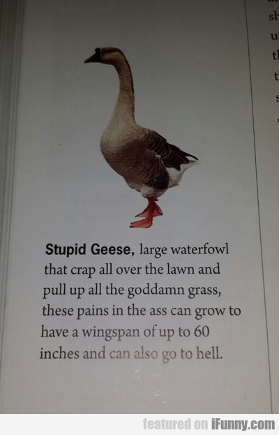 Stupid Goose: Large Waterfowl That Craps...