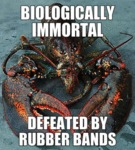 Biologically Immortal