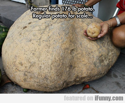 Farmer Finds 176 Pound Potato...