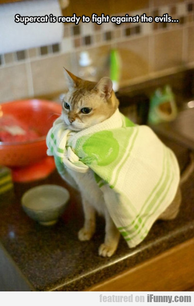 Supercat Is Ready To Fight Against The Evils...