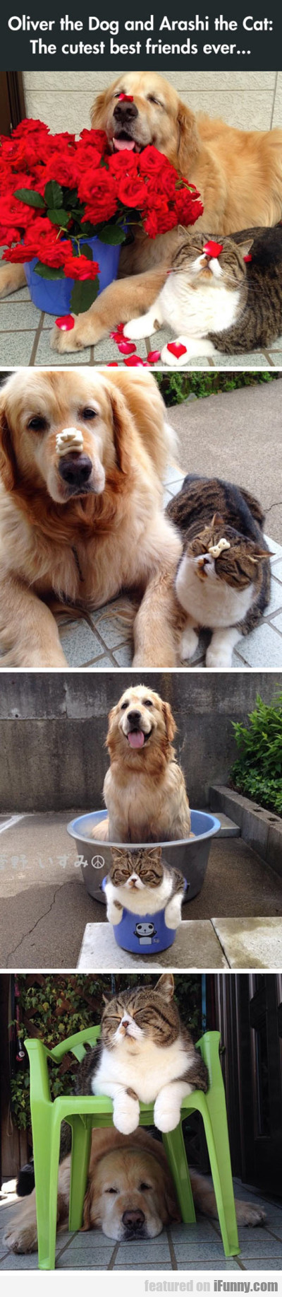 Oliver The Dog And Arashi The Cat - The Cutest...