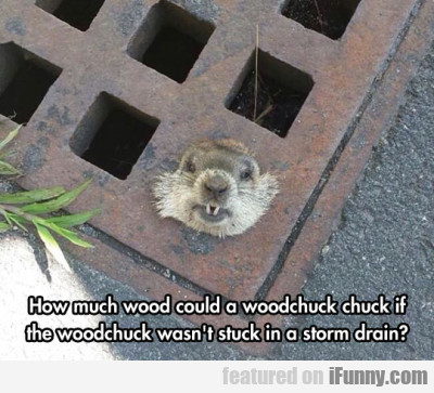 How Much Wood Could A Woodchuck Chuck If... | iFunny.com