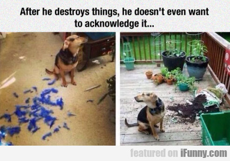 After He Destroys Things He Doesn't Even Want...