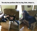 The Only Two Positions That My Dog, Duke, Sleeps..
