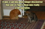 It Was A Sad Day When Ginger Discovered That...