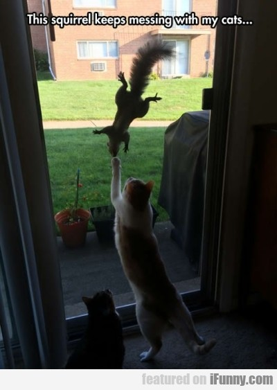 This squirrel keeps messing with my cats..