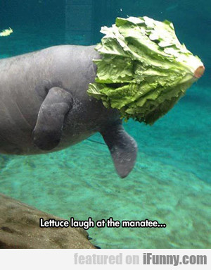 Lettuce Laugh At The Manatee...