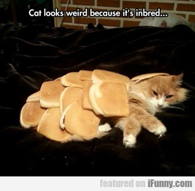 Cat Looks Weird Because It's Inbred..
