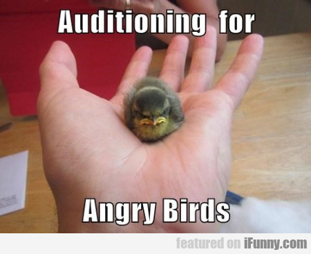 Auditioning For Angry Birds