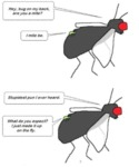 Hey, Bug On My Back, Are You A Mite...