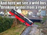 And Here We See A Wild Bus...