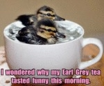 I Wondered Why My Earl Grey Tea