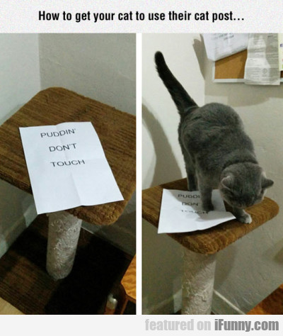 How To Get Your Cat To Use Their Cat Post...