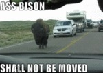 Ass Bison Shall Not Be Moved