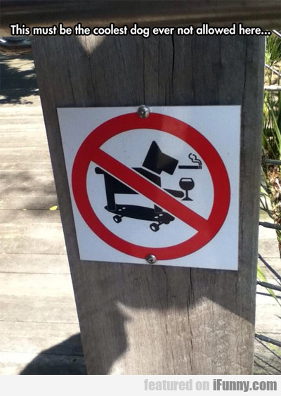 This Must Be The Coolest Dog...