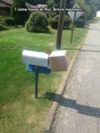 I Came Home To This. Bravo Mailman...
